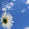 写真: 5月の青空