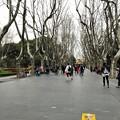 フェラーリと襄陽公園と新楽路 (3)