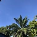 ヤンゴンの青空