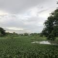 ミャンマー ヤンゴン (4)