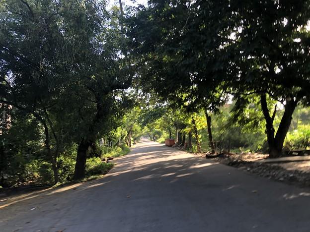 コロナ禍のヤンゴンで (14)