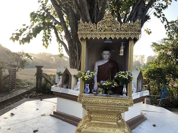 ヤンゴンの片隅で 12月11日 (15)