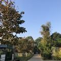 Photos: ヤンゴンの片隅で 12月11日 (18)