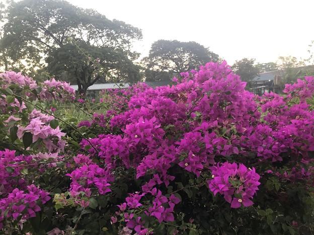 12月13日の花