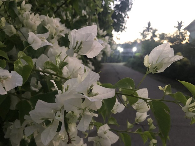 12月13日の花 (3)