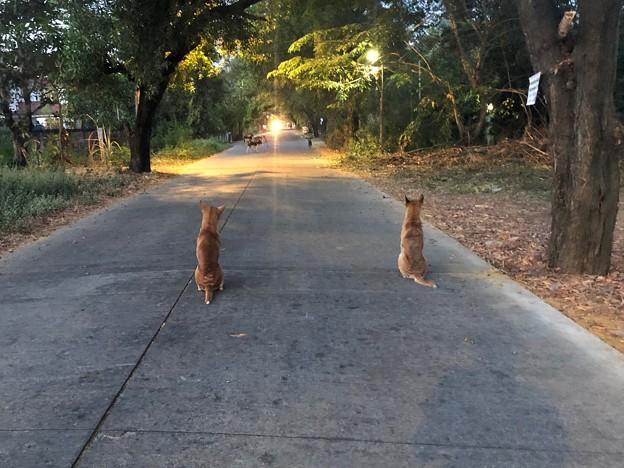 12月22日の早朝散歩 (3)
