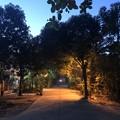Photos: ヤンゴンの朝霧 12月23日 (5)