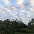 Photos: 曇り空のヤンゴン 12月26日 (6)
