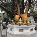 Photos: 1月4日のヤンゴンの朝 (9)