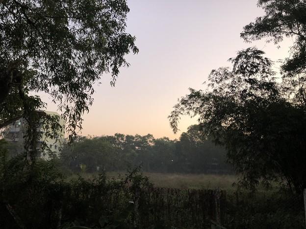 1月5日のヤンゴンの朝 (8)