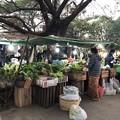 Photos: 1月5日のヤンゴンの朝 (11)