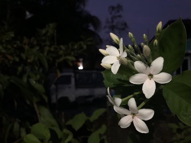 1月15日のヤンゴンの朝 (1)
