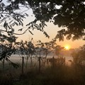1月19日のヤンゴンの朝 (14)