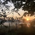 Photos: 1月19日のヤンゴンの朝 (14)