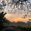 Photos: 1月20日のヤンゴンの朝 (9)