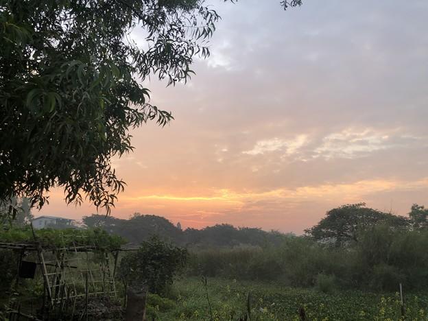 1月20日のヤンゴンの朝 (8)
