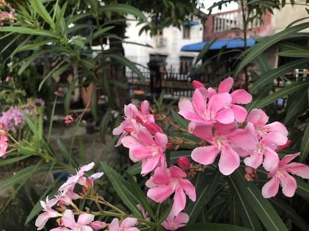 1月21日のヤンゴンの朝 (10)