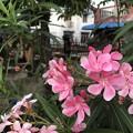 Photos: 1月21日のヤンゴンの朝 (10)
