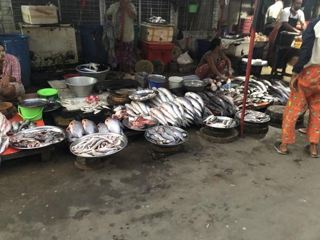 1月22日のヤンゴンの朝 (3)