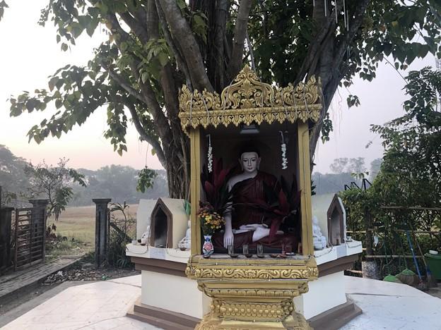 1月22日のヤンゴンの朝 (17)
