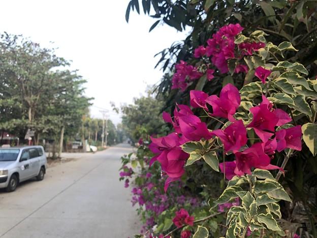 1月223日のヤンゴンの朝 (25)