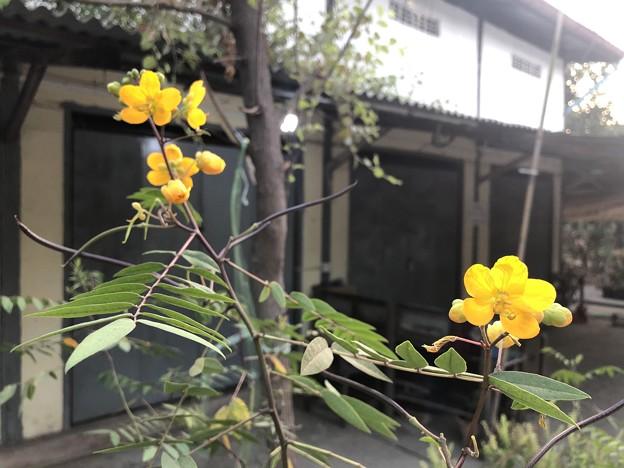 1月223日のヤンゴンの朝 (10)