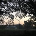 Photos: 1月24日のヤンゴンの朝 (9)