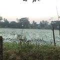 Photos: いつもより暗く感じる1月26日のヤンゴンの朝 (10)