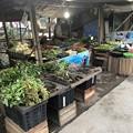 Photos: 寝坊した朝のヤンゴン1月27日 (5)