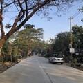 Photos: 寝坊した朝のヤンゴン1月27日 (23)
