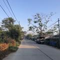 Photos: 寝坊した朝のヤンゴン1月27日 (21)