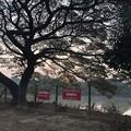 Photos: ヤンゴンもやの朝な1月28日 (4)