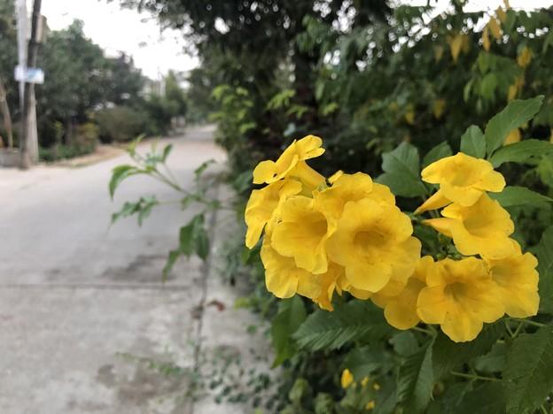 Photos: 1月30日のヤンゴンの朝 (14)