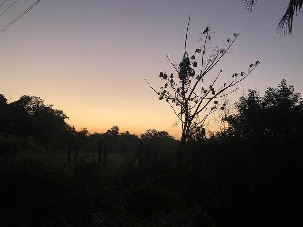 クーデター二日目のヤンゴンの片隅の朝 (5)