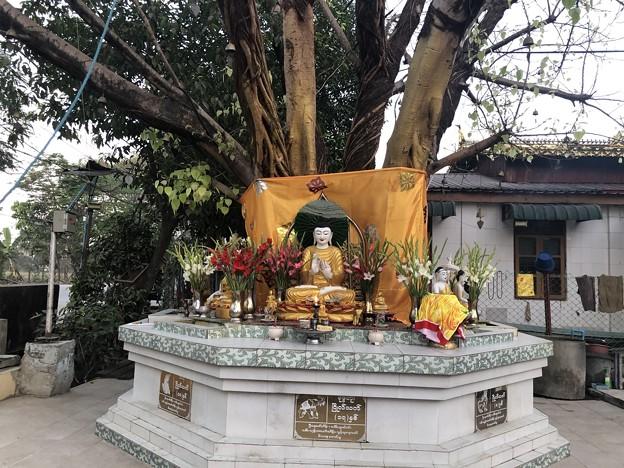 クーデター二日目のヤンゴンの片隅の朝 (18)