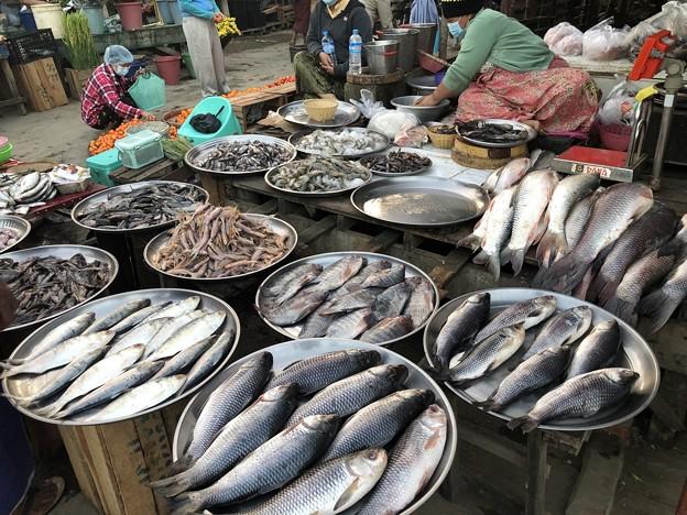 2月3日のヤンゴンの朝 (13)