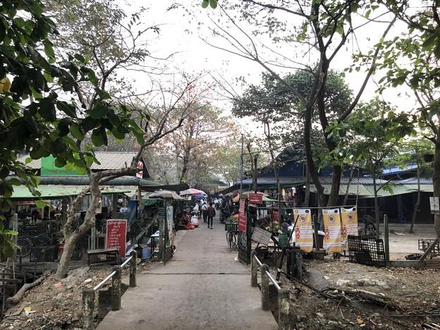 土曜日の朝のヤンゴン2月6日 (11)