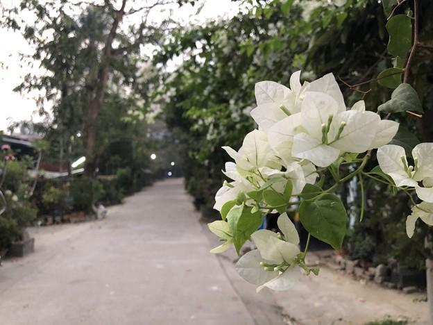 土曜日の朝のヤンゴン2月6日 (5)