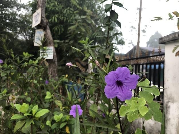 霧深い2月12日のヤンゴンの朝 (13)