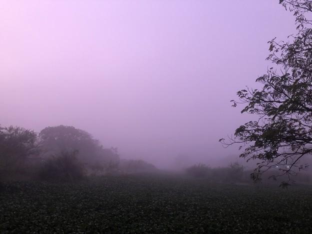 霧深い2月12日のヤンゴンの朝 (6)