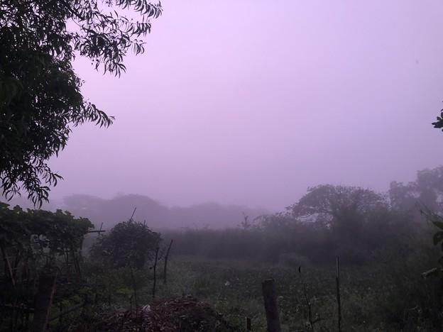 霧深い2月12日のヤンゴンの朝 (4)