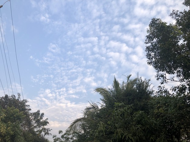 2月19日のヤンゴンの小区の朝 (4)