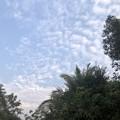Photos: 2月19日のヤンゴンの小区の朝 (4)