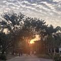 2月19日のヤンゴンの小区の朝 (2)