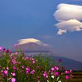 写真: 秋桜の咲く頃