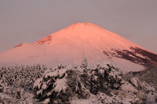 写真: 54年振りの紅富士