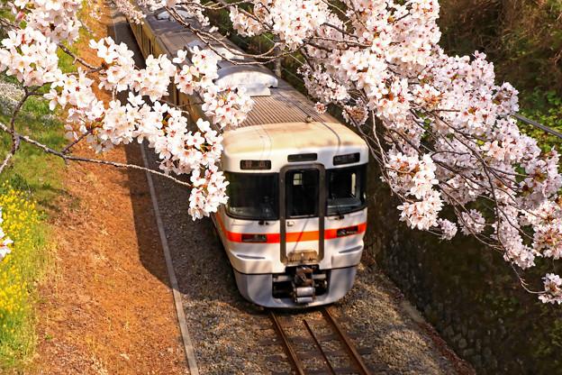 写真: 春をくぐり抜けて