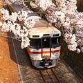 Photos: 春をくぐり抜けて