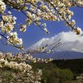 写真: 春は何処へ