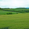 写真: 美瑛の丘